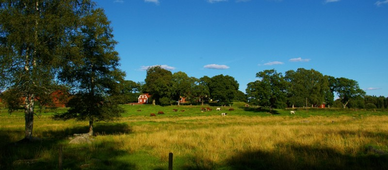 The beautiful landscape around our cottage in Sweden.